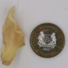 Lily Buld small coin